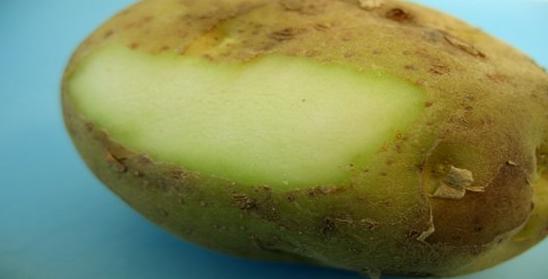 Uwaga na zielone podstępne ziemniaki!