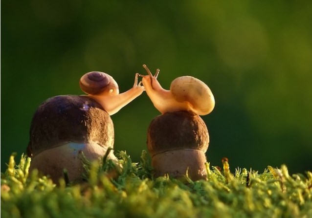 Miłość, czułość, bliskość...