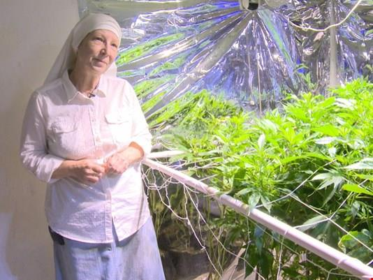 Z miłości do ludzi przygotowują lecznicze preparaty z marihuany.