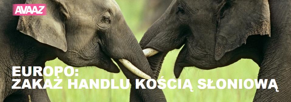Ratujmy słonie!