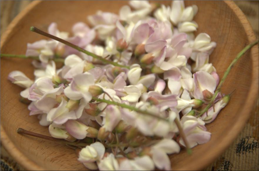 Kwiaty akacji - robinia biała z różowym posmakiem:)