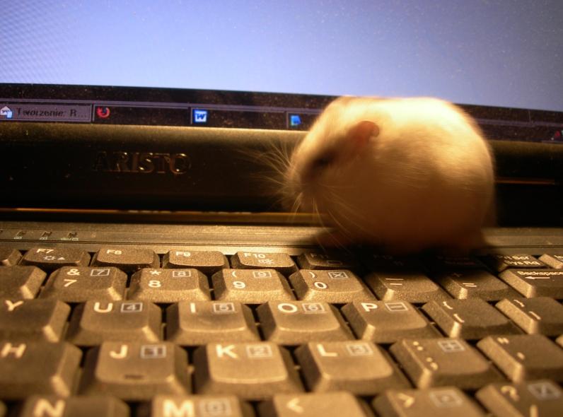 A kto tu się myje na klawiaturze?