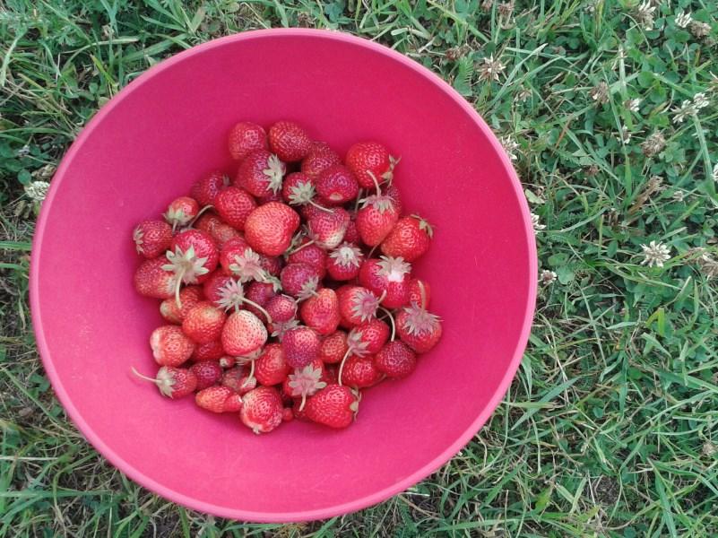Miska truskawek - pełnia szczęścia:)