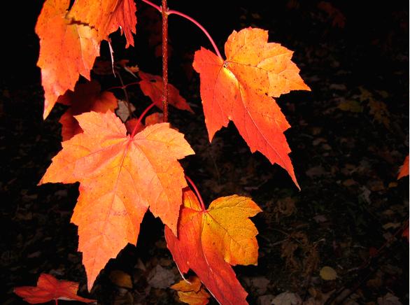 Wzmocnij się jesienią...