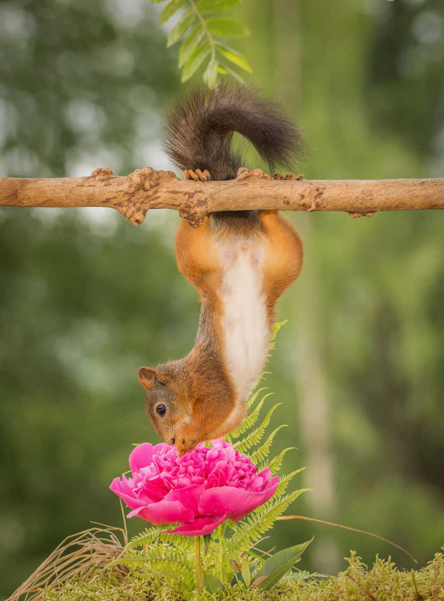 i-shoot-squirrels-in-my-backyard-and-i-can-almost-make-a-living-from-what-i-love-2__8801