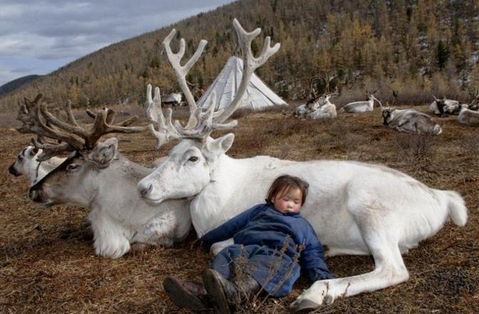 Plemię Dukha z Mongolii. Renifery są przyjaciółmi i delikatnymi towarzyszami już od najmłodszych lat...