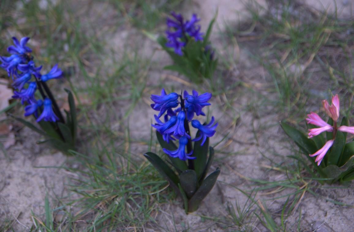 Pierwsze kwiaty tej wiosny...